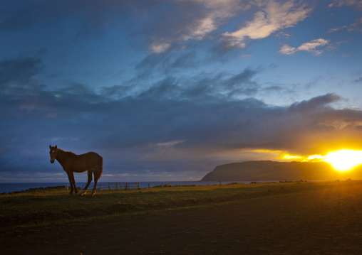 Horse In The Sunset, Easter Island, Chile