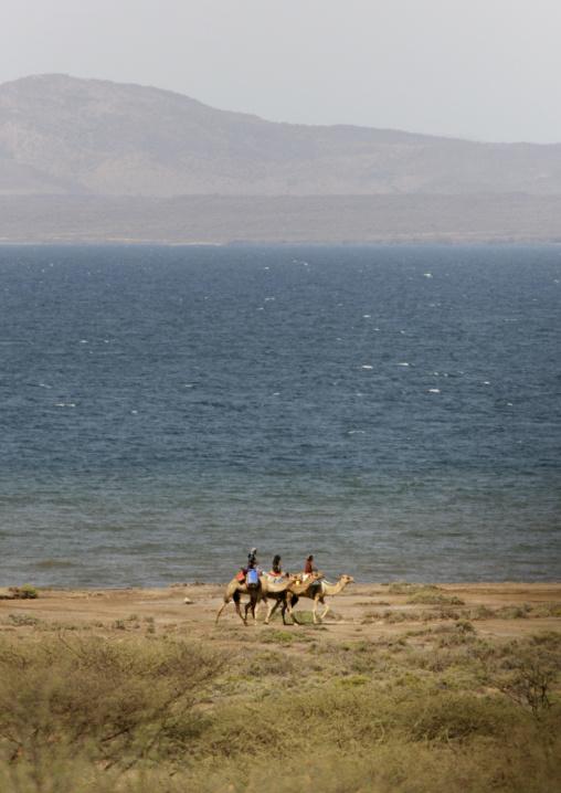 Rashaidas In Danakil Desert, Eritrea