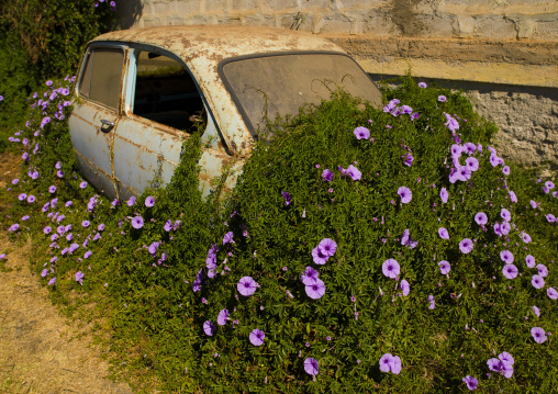 Old Car Covered Of Herbs And Flowers, Asmara, Eritrea