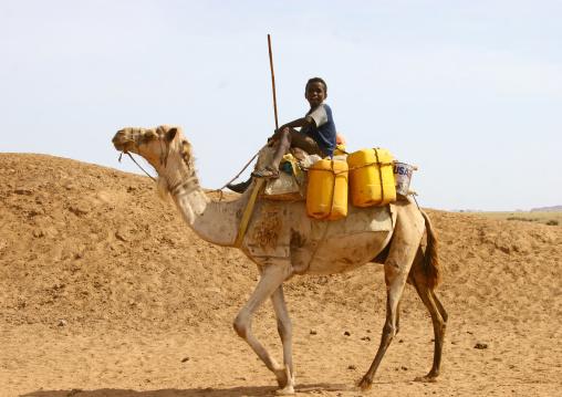 Rashaida Tribe Boy On His Camel In Danakil Desert Eritrea