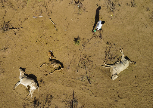 Aerial view of dead cows during the drought, Oromia, Yabelo, Ethiopia