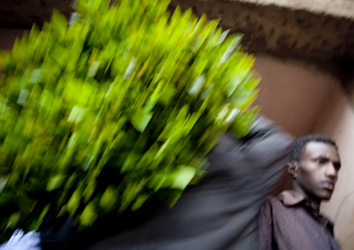 Rear View Of A Man Passing With A Huge Ball Of Khat In The Giant Khat Market Near Harar, Adaway, Ethiopia