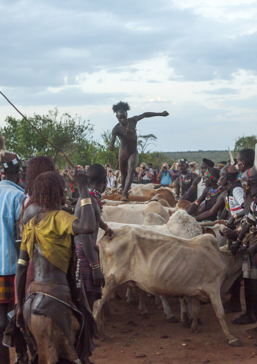 Bashada Tribe Man Jumping Above Cows During A Bull Jumping Ceremony, Dimeka, Omo Valley, Ethiopia
