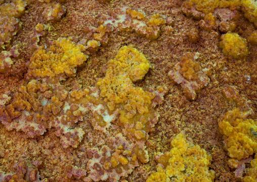 The colorful potassium salt crust formed by hot springs in the danakil depression, Afar region, Dallol, Ethiopia