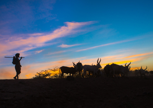 Silhouette of an afar tribe man with his cows at sunset, Afar region, Afambo, Ethiopia