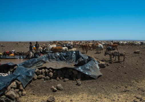 Somali people collecting water in a tank in the desert, Afar region, Yangudi rassa national park, Ethiopia