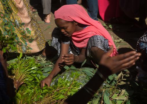 Women selling khat in the market near harar, Harari region, Awaday, Ethiopia