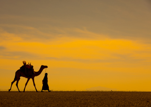 An Afar woman with a camel in the harsh dry desert at the danakil depression, Afar region, Mile, Ethiopia