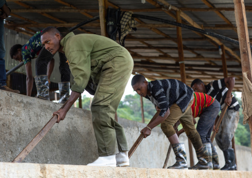 Ethiopian workers washing coffee beans in water, Oromia, Shishinda, Ethiopia