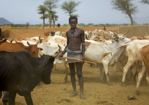 Tsemay tribe man standing with a shepherd stick and wearing a loincloth amidst cows, Omo valley, Ethiopia