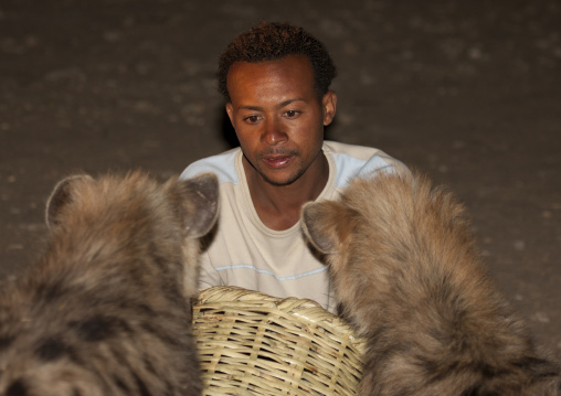 Hyenas Feeding At Night, Harar, Ethiopia