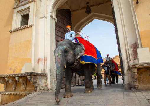 Elephant ride in Amer fort and palace, Rajasthan, Amer, India