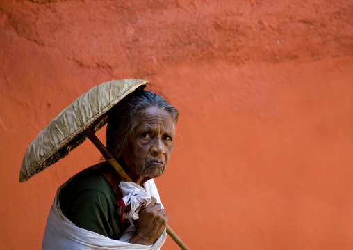 Old Pilgrim Woman Under The Protection Of An Umbrella Going To A Temple, Kochi, South India