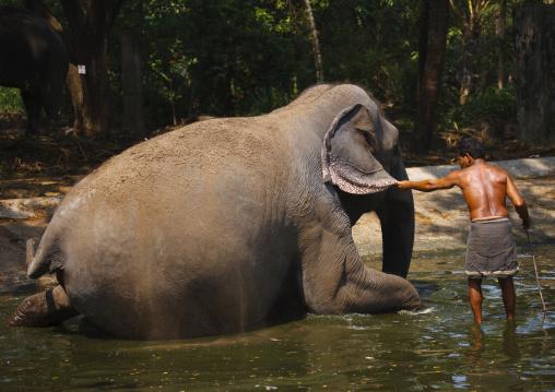 Elephant Sitting Down For Bath Time, Kochi, India