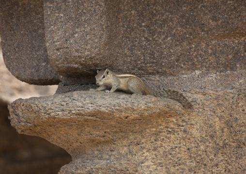 Squirrel Hidden On The Rocks Cut At The Shore Temple, Mahabalipuram, India