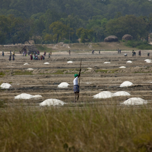 Workers In Salt Marsh Located On The Edge Of A Forest, Mahabalipuram, India