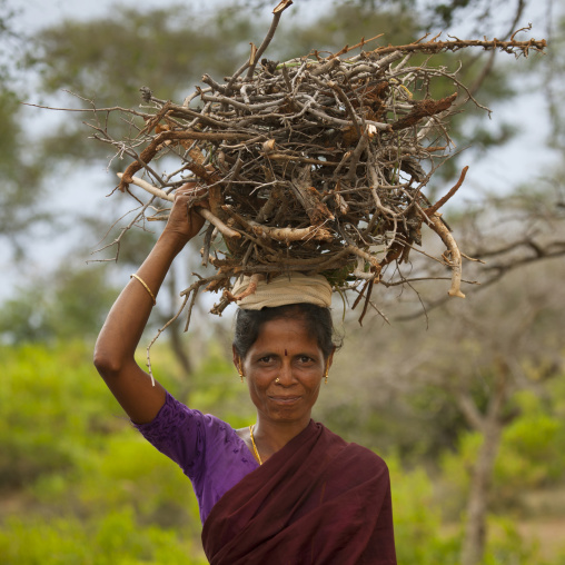Indian Mature Woman Coming Back From The Forest Carrying A Pile Of Small Wood On Her Head, Kanadukathan Chettinad, India