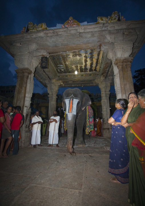 The Crowd Gathered For A Ceremony Around An Altar And An Elephant Wearing A Vaishnava Tilak On Its Forehead At The Sri Ranganathaswamy Temple, Trichy, India