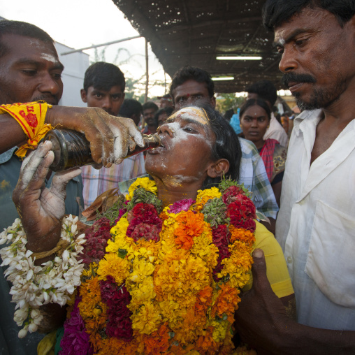 Woman With Offering And Covered By Ashes Drinking Cola And Carried By Men At Fire Walking Ritual, Madurai, South India