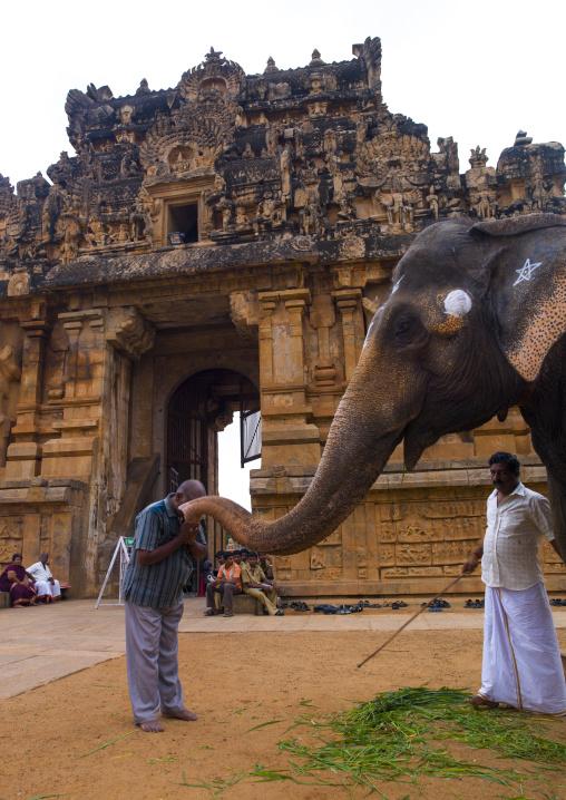 Man Receiving Elephant's Blessing In Front Of Brihadishvara Temple, Thanjavur, India