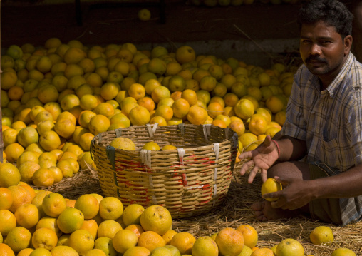 Orange Seller Sitting On Hays Selecting His Products In A Basket, Madurai, India