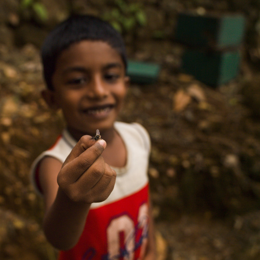 Young Boy Holding A Bee Between His Fingers, Periyar, India