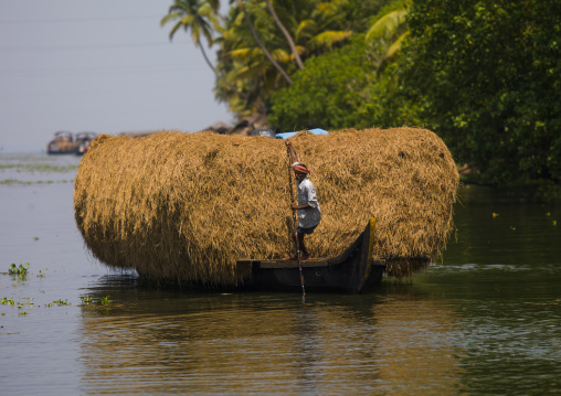 Mature Man Pulling His Heavily Loaded Bark With Hays Using A Wooden Stick On The Backwaters Of Kerala, Alleppey, India