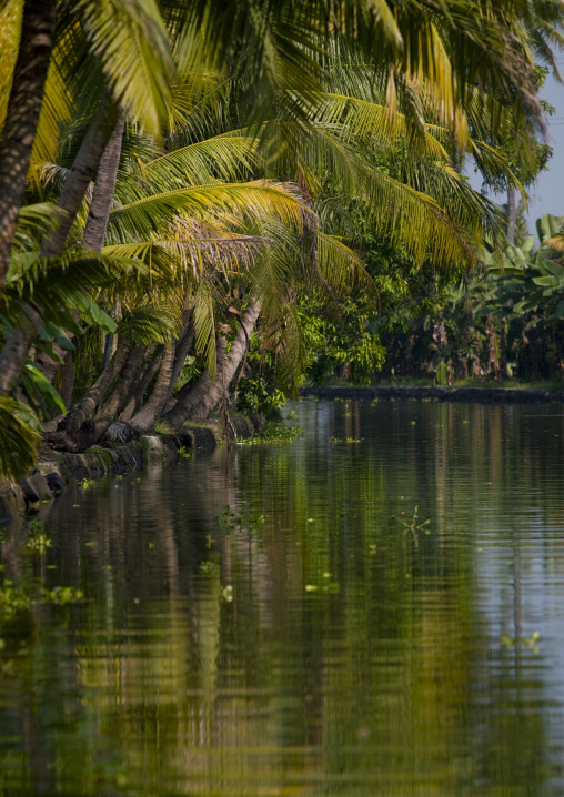 Waterway Boredered By Palm Trees On The Backwaters Of Kerala, Alleppey, India