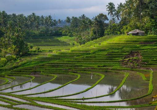 The Terraced Rice Fields