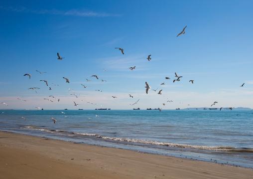 seagulls on the seaside, Hormozgan, Bandar Abbas, Iran