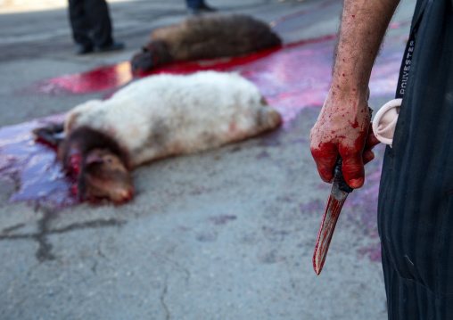 Hand Of Man Covered With Blood Man After A Ritually Slaughtered Sheep On Ashura, The Day Of The Death Of Imam Hussein, Kurdistan Province, Bijar, Iran