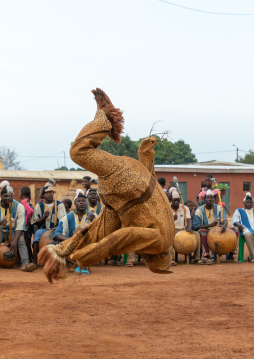 Boloye dance of the panther man in the Senufo community, Savanes district, Waraniene, Ivory Coast