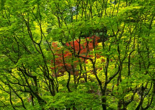 Garden in koto-in zen buddhist temple in daitoku-ji, Kansai region, Kyoto, Japan