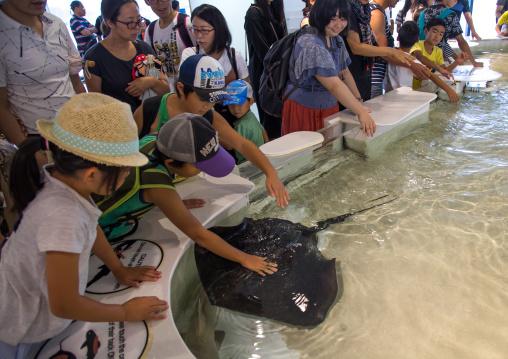 People touching a ray in the touch pool in Kaiyukan aquarium, Kansai region, Osaka, Japan