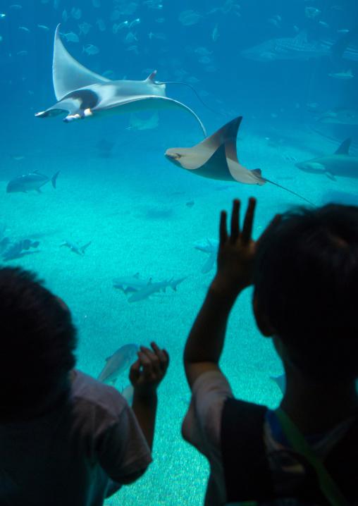 Children watching mantas ray in Kaiyukan aquarium, Kansai region, Osaka, Japan
