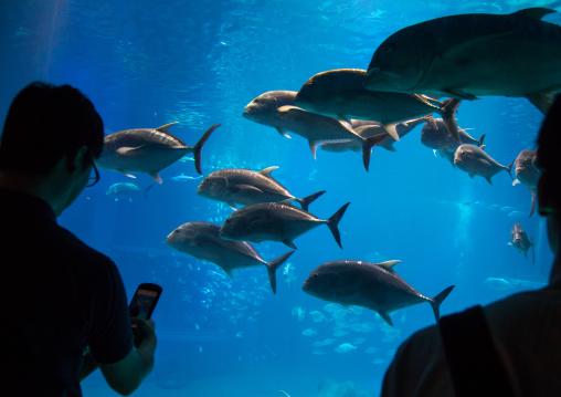 Silhouettes people watchingt fishes in Kaiyukan aquarium, Kansai region, Osaka, Japan