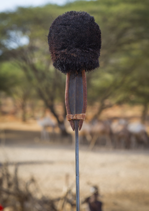 Rendille tribes spear with an ostrich feather on the top, Marsabit district, Ngurunit, Kenya