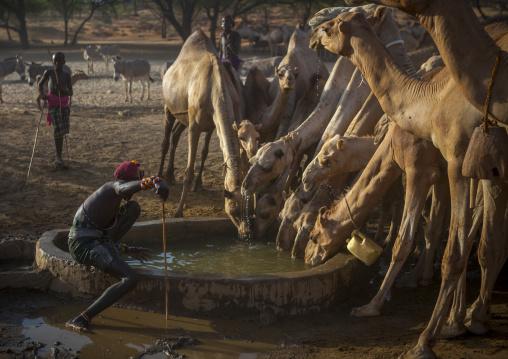 Rendille warriors giving water to their camels, Marsabit district, Ngurunit, Kenya