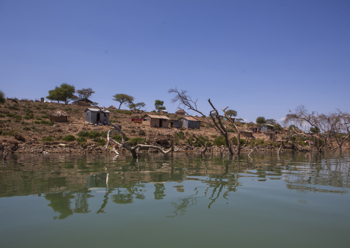 Trees covered by increased water, Baringo county, Baringo, Kenya
