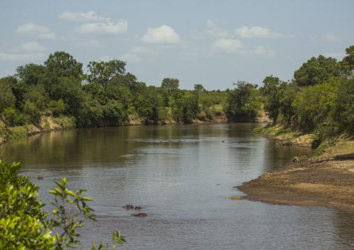 Hippopotamus amphibius in a river, Rift valley province, Maasai mara, Kenya