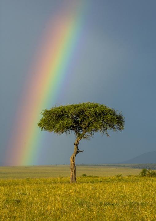 Rainbow after rainstorm, Rift valley province, Maasai mara, Kenya
