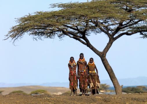 Turkana tribe women standing under an acacia, Rift Valley Province, Turkana lake, Kenya