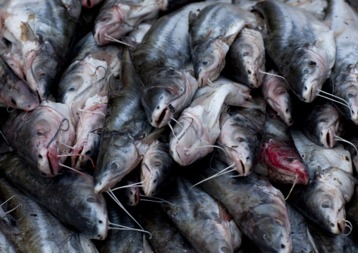 Mekong fishes on a market, Pakse, Laos