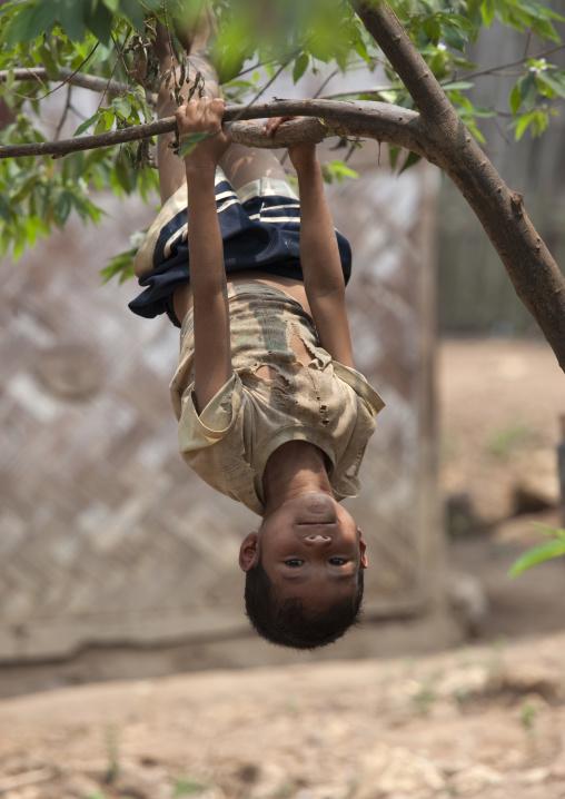 Khmu minority kid playing in a tree, Xieng khouang, Laos