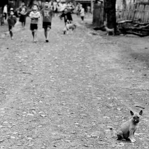 Dog in a street, Houei xay, Laos