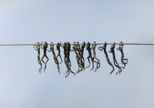 Brochette of dried frogs, Luang namtha, Laos