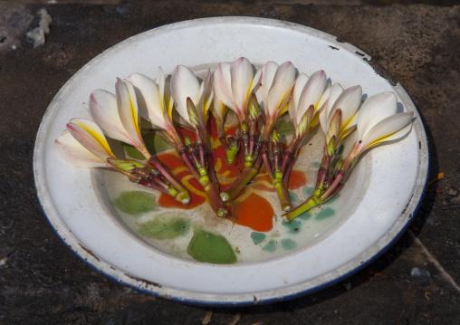 Religious offering, Vientiane, Laos