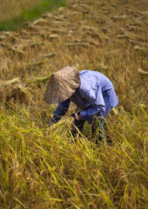 Farmer in a rice field, Vientiane, Laos