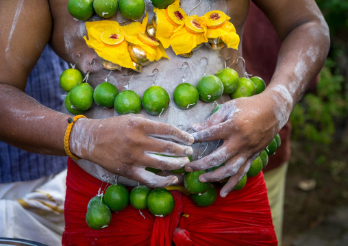 A Pierced Devotee Laden With Lemons On His Belly During The Thaipusam Hindu Festival At Batu Caves, Southeast Asia, Kuala Lumpur, Malaysia