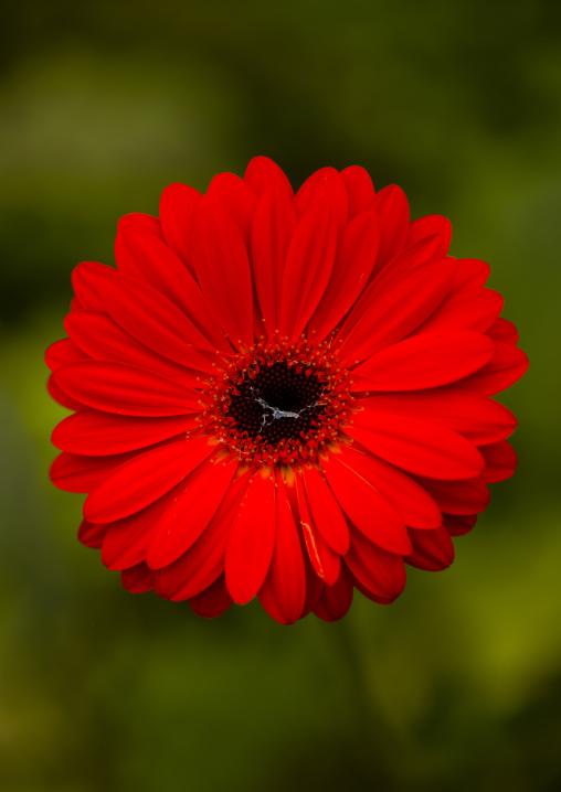 Ref Flower, Cameron Highlands, Malaysia